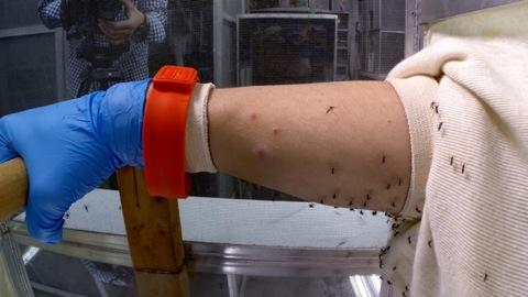 Merveilleux Inside An Insect Repellent Test Lab