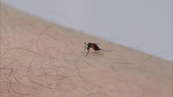 Consumer Reports Top-Rated Insect Repellents