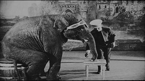 Elephant Ringing A Bell