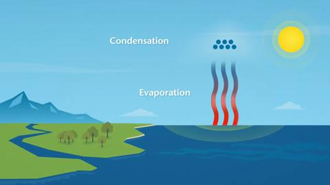 How does rain form? What is the water cycle? 